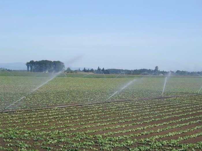 good_irrigation_management